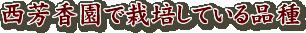 西芳香園で栽培している品種
