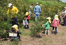 生産活動:ブルーベリー収穫体験