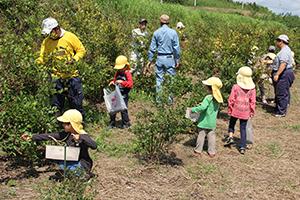生産活動:ブルーベリーの収穫体験を開催