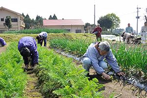 自家農園での生産活動