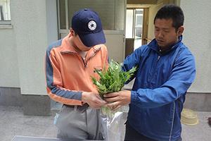 野菜の出荷準備:就労移行支援