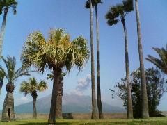 椰子の木と桜島